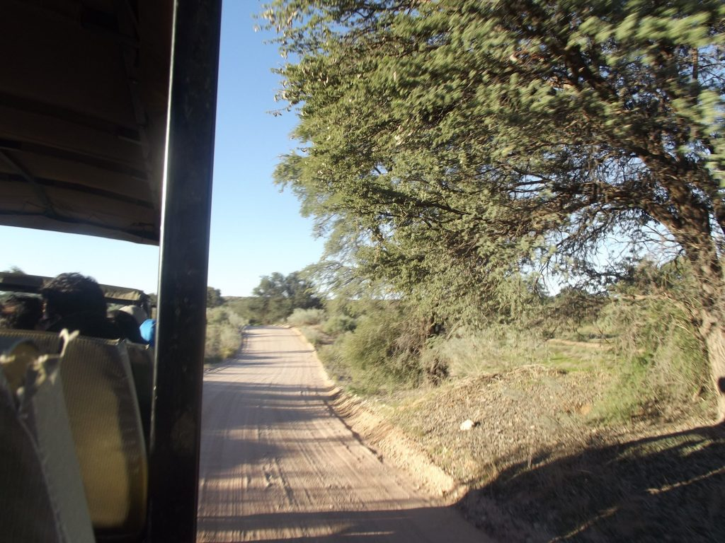 game-reserve-vehicle-view